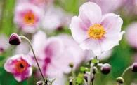 Растения в Аюрведе - лечение травами