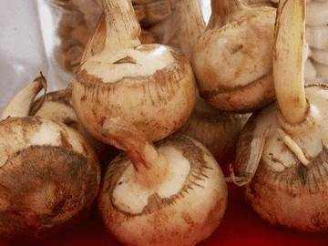 Корневища едят в сыром, тушеном, вареном виде, маринуют на зиму или засахаривают. Семена и молодые листья также используются в различных блюдах.