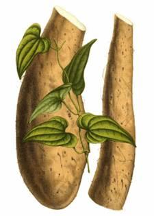 Ямс, Dioscorea spp., Dioscoreaceae
