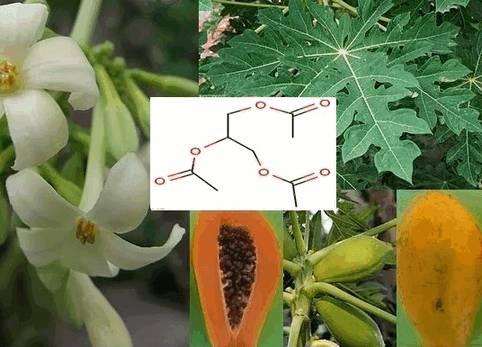 Папайя обладает анальгетическими, противоотечными, антисептическими, ранозаживляющими, глистогонными, смягчающими, противовоспалительными, отбеливающими, отшелушивающими, антиоксидантными свойствами