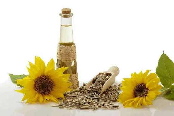 Подсолнечное масло получают из семян подсолнечника. В семенах подсолнечника содержится до 35% жирного масла. Получают его двумя методами — горячим и холодным прессованием, при этом его свойства и состав во многом зависят от метода его получения и имеют широкий диапазон.