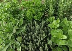 С химической точки зрения, травы содержат целый спектр биологически активных веществ.
