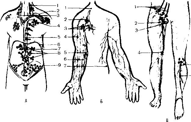 Предстартовый массаж (мобилизационный)