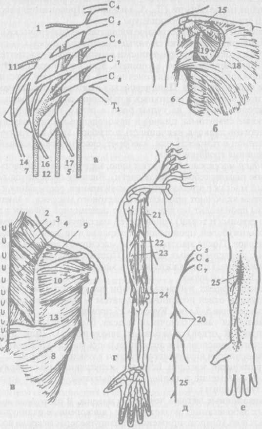 Массаж при заболеваниях нервной системы и травмах